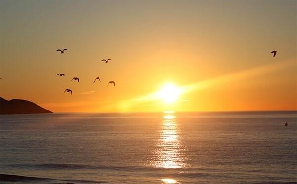 palomas-amanecer-2-copia