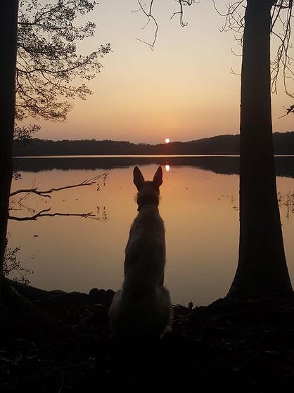 Lionel im Sonnenuntergang.jpeg