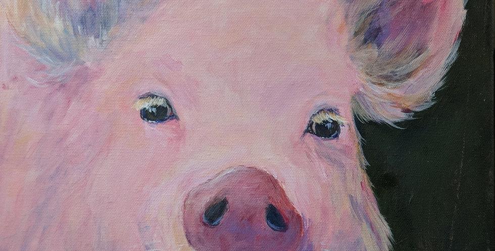 Petunia the Pig