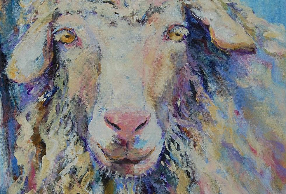 Henri the Angora Goat