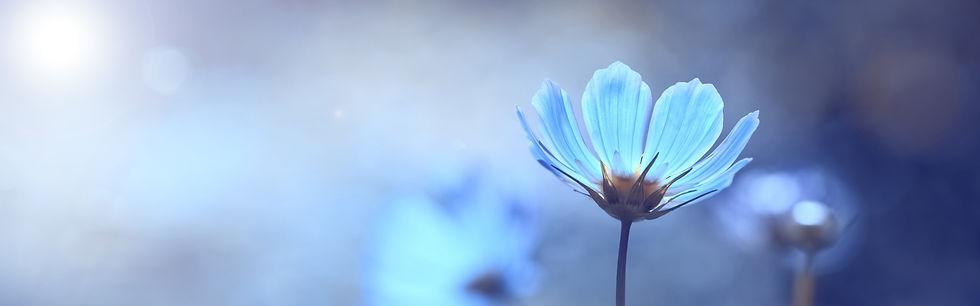Flower%20Ilona_edited.jpg