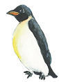 transparent-penguin_edited.png