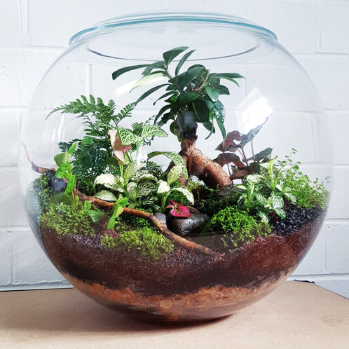 Utopia Large Terrarium Perth