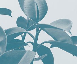 MB Foliage.jpg
