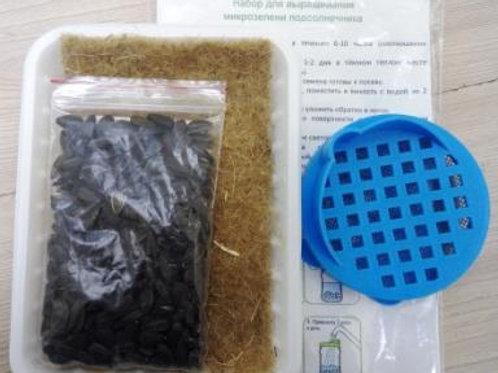 Набор для выращивания микрозелени подсолнечника