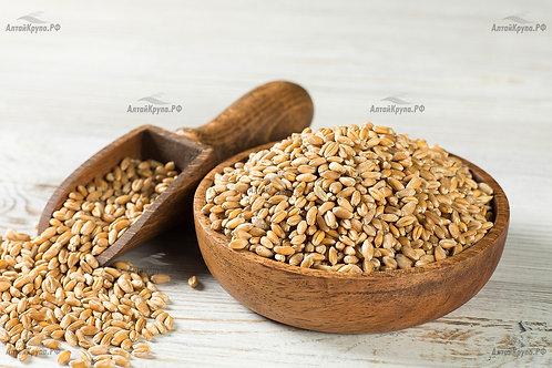 Пшеница для проращивания, весов. 500гр.