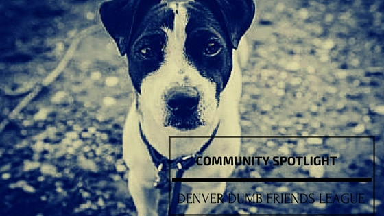 Visit Our Denver Dumb Friends League