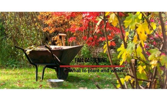 Flower Power. Fall Gardening Tips.