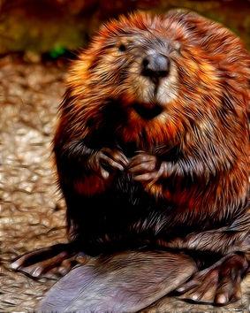 sendout The Beaver -16x20-2017.jpg