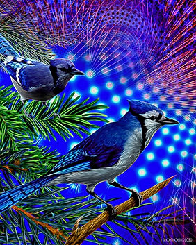 Sendout - Blue Jay Way - 16 x 20 - 2020.