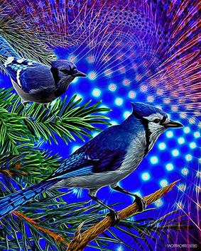 Sendout - Blue Jay Way - 16 x 20 - 2020.