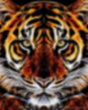 Tiger art- Timothy Mohan