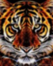 Tiger art- Timothy Mohan