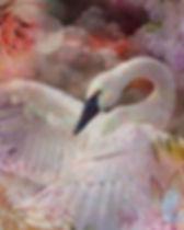 Swan artwork titled Moonlight Sonata Mohan art