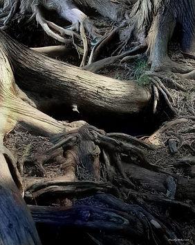 sendout Dark Forest -1-16x20-2016.jpg