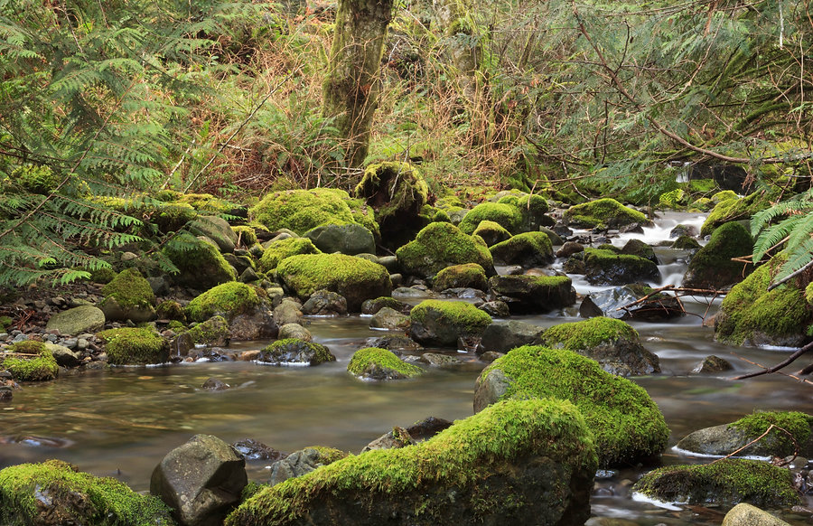 Moss covered rocks lie undisturbed within an flowing stream