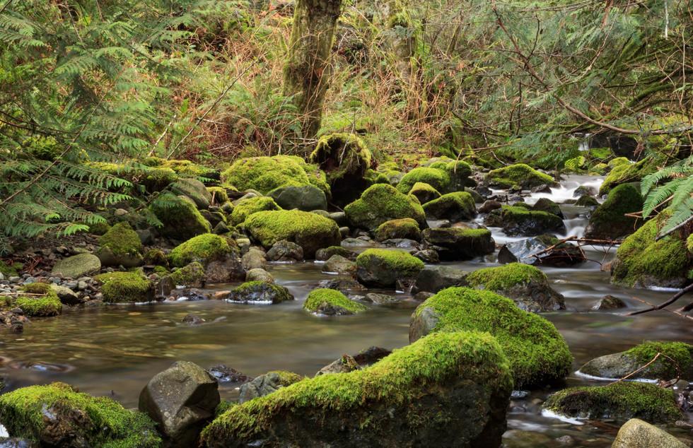 Undisturbed Moss