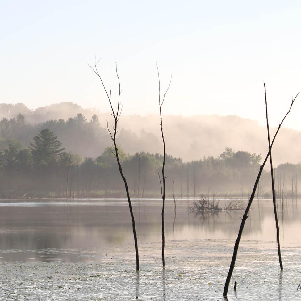 Silent Fog