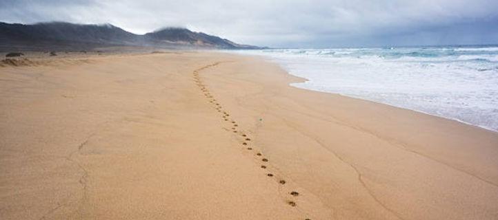 Footprint-5_edited.jpg