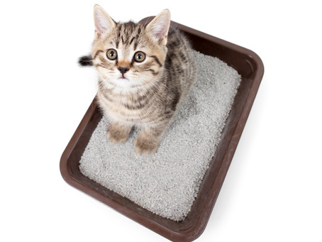 Bloody Urine; The Rhymes And Reasons In Cats