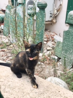 How Can I Help Kitten Lady Save USDA Research Kittens?