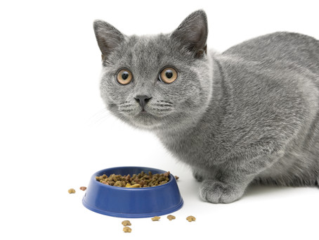 How Do I Understand Cat Food Labels? Or Getting That Summer Body In The Winter