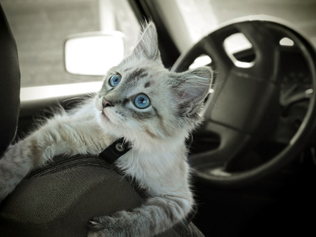 Cats And Hot Cars