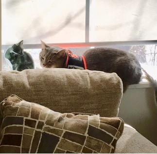 How Do I Teach My Cat To Not Scratch My Furniture?