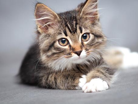 Fabulous Feline Photo Contest