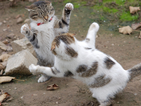 Do Your Cats Fight After Veterinary Visits?