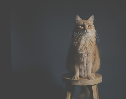 brown-cat-on-wooden-stool-chair-395075_e