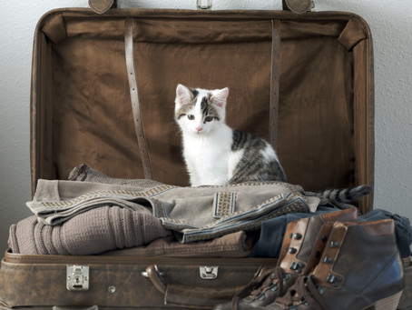 What Do You Do With Your Cat When You Are On Vacation?
