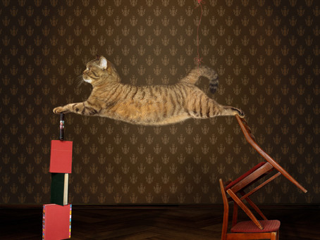 Have You Ever Been To A Cat Circus?