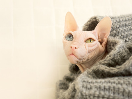 Does Your Cat Have Allergies?