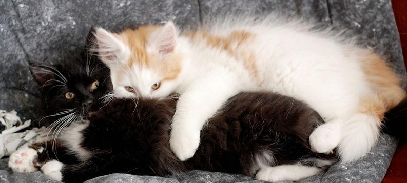 kittenlove.jpg