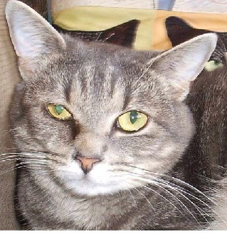 My Cat Is Hyperthyroid.  What Do I Do?