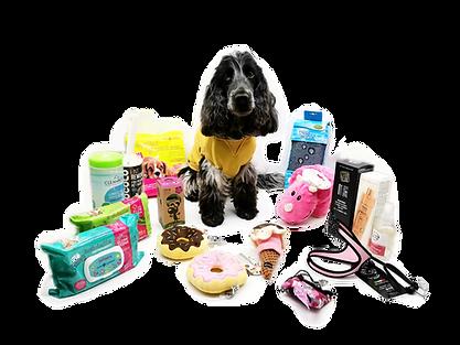 toiletteur 75017 accessoires chien chat paris  toilettage  tonte bain jouet coupe epilation coussin croquette animalerie croquettes coussin accessoires chiens chats paris 75017  toilettage