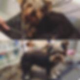 toiletteur 75017 accessoires chien chat paris  toilettage  tonte bain jouet coupe epilation coussin croquette animalerie