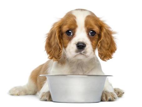 18 marques d'aliments pour chiens ont été volontairement rappelées pour contenir des toxine