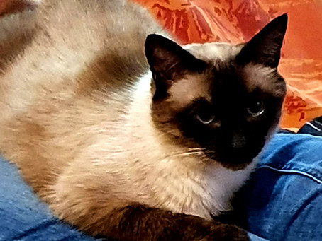 Nourriture sèche ou humide : quel est le meilleur pour notre chat.