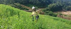 Rehabilitation of an Indonesian mine site