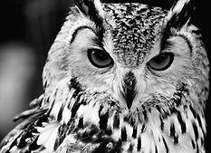 Accelerator owl.jpg