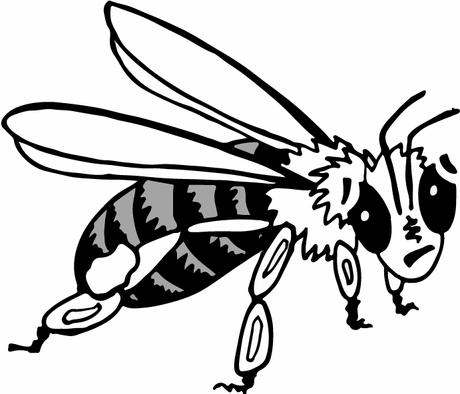 Honey-bee-2.png