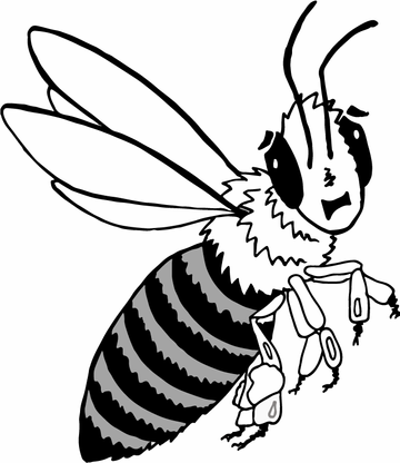 Honey-Bee-1.png
