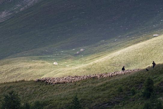 Pastoralisme dans le vallon du Lauzannier