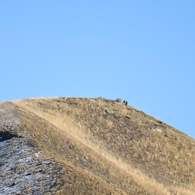 vautours cime de l'alpe