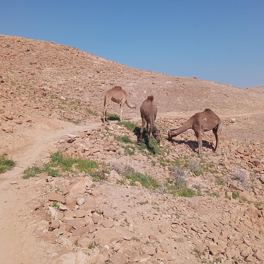 שביל ישראל ערד-מצדה קב' אלדד