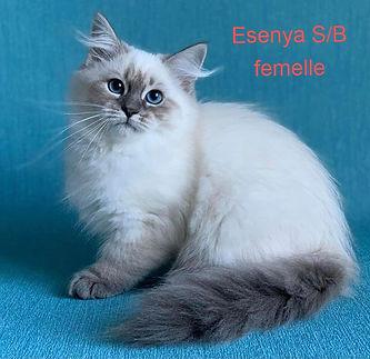 esenya_edited.jpg