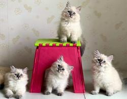 chatons_bientôt_disponibles