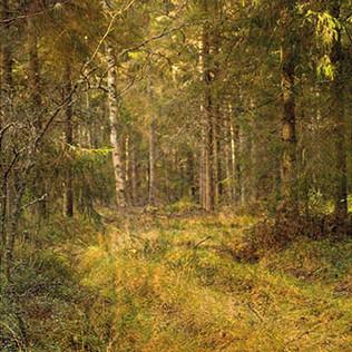 Metsätie